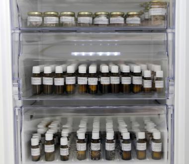 V zmrzovalnikih pri -20 stopinjah Celzija hranijo ta trenutek šeststo vzorcev semena.