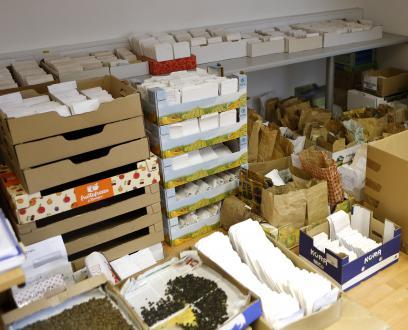 V belih papirnatih vrečicah je že očiščeno in dokumentirano seme, tisto v škrnicljih in kartonskih platojih še čaka na potrpežljivo 'obdelavo'.