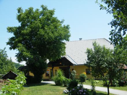 Standardne sorte razvijejo večja drevesa in jih sadimo vsaj šest metrov od hiše.