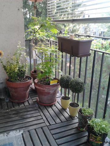 Zgleden balkonski vrt Špele Rojec