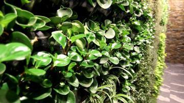 Foto: arhiv Vertical Plant Life