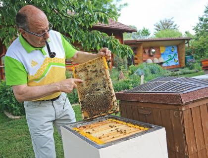 Biodinamično čebelarjenje: Čebele si satovje gradijo same