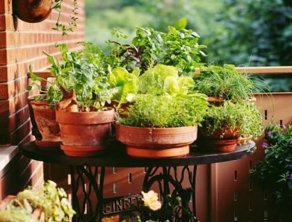 Vrtni izziv: Vrt na balkonu