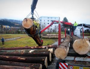 Kmalu jubilejna licitacija vrednejših sortimentov lesa