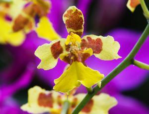 Orhideje zacveto pozimi