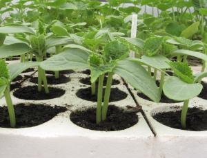 Vzgoja sadik: ne delajmo jim družbe v kratkih rokavih