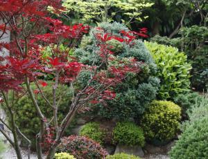 Načrtovanje okrasnega vrta: pravila z osebnim poudarkom