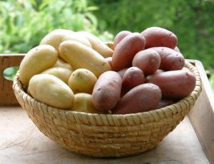 S krompirjem je treba znati