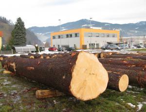 Vrednejši les v Slovenj Gradcu pripravljen na licitiranje