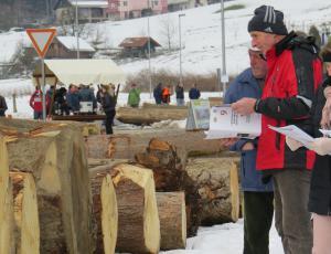 Za jubilejno licitacijo blizu rekordne količine lesa