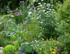 Poleti vrtnarimo z mislijo na jesen