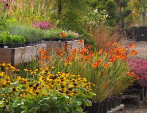 Sajenje trajnic: Pisana jesen na okrasnem vrtu