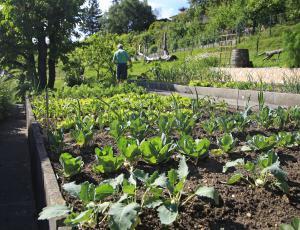 Vrtni izziv: Za vrt primeren štiriletni kolobar