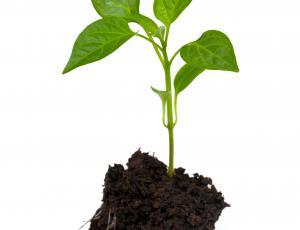 Vzgoja sadik plodovk: Ne pomehkužimo jih
