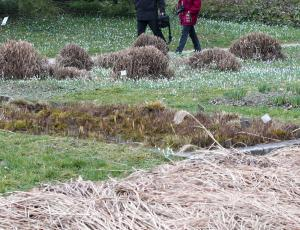 Za zaščito rastlin pred mrazom organski in zračen material
