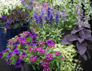 Sezonske okrasne rastline: Očarljiva pestrost cvetov