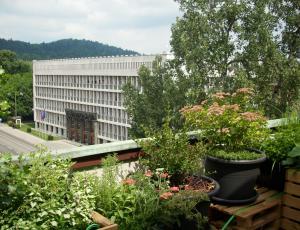Zelene strehe: Varujejo objekt pred vremenskimi vplivi