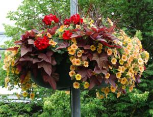 Vrtni izziv: Balkonske zasaditve