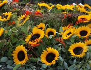 Izbiramo najlepši cvetoči vrt