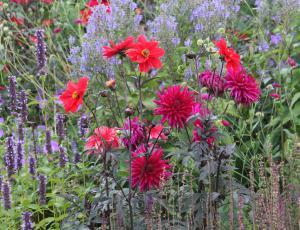 Izbiramo najlepši cvetoči vrt: V izboru je že več kot šestdeset vrtov
