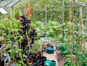 Rastlinjaki: Domača zelenjava vse leto