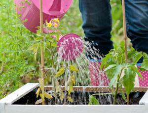 Vrtni izziv: Za strokovnimi nasveti še vaši dosežki