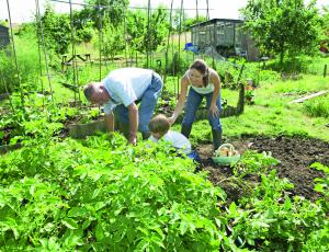Natečaj Naredi si vrt: Vrtnarite z nami