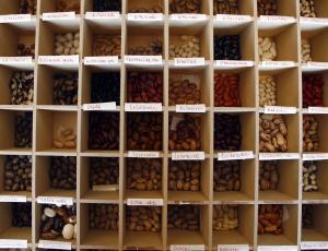 Gorenjska hranilnica semen bo zaživela še letos