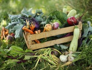 Kmetijski pridelki pri pridelovalcih cenejši