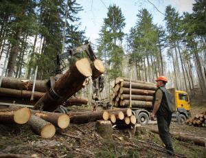 Vrednost odkupa okroglega lesa lani višja za 34 odstotkov