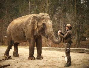 V živalskem vrtu to pomlad nove živali in številne novosti
