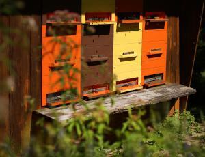 Na voljo več razpisov za čebelarje
