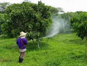 Vrtičkarji naj se izognejo pesticidom