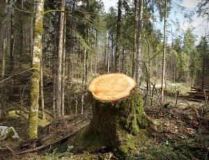 Kmetje lani posekali 1,8 milijona kubičnih metrov lesa