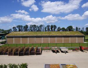 Kritine in ostrešja: Zelene strehe za hladnejši zrak v mestih