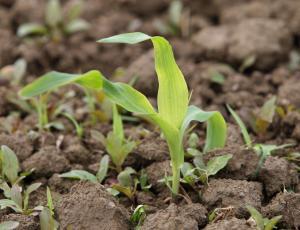 Nad škodljivce brez nevarnih pesticidov