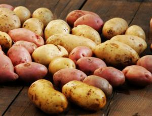 Semenski krompir za vrt