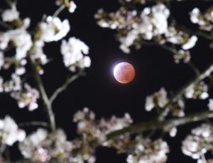 Vpliv Lune na naše vrtnine