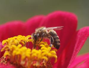 Ob svetovnem dnevu čebel na voljo milijon spominskih kovancev