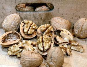 Slovenski oreh: »Ljudje ga rabijo za neki kruh v božičnih dneh«