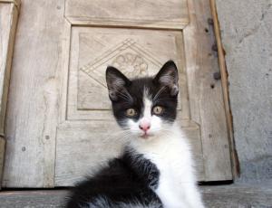 Mačke imajo rajši hrano, podobno naravnemu plenu