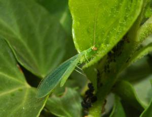 Pesticidi uničujejo življenje v tleh