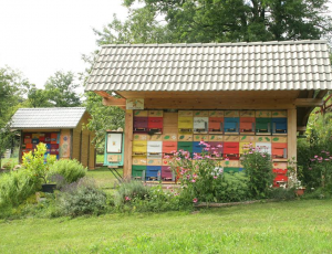 Vzorčni medoviti vrt čebelarstva Ambrožič