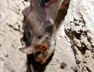 Kaj imajo skupnega netopirji in rastline?