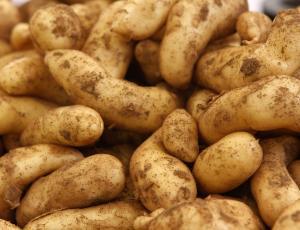 Semenski krompir v zabojčkih