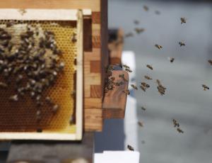 Pravilna uporaba fitofarmacevtskih sredstev za varstvo čebel