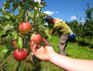 Gojenje sadnih vrst