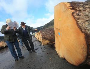 V Slovenj Gradcu že zbirajo najboljši les za licitacijo