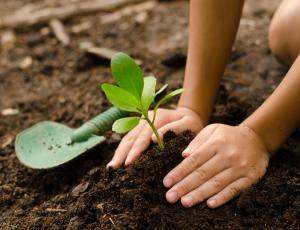Z naraščajočim spletnim trgovanjem vse več tujerodnih rastlin
