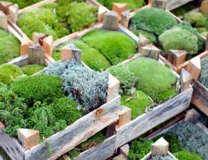Zeleni žamet
